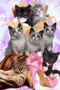Коты, кошечки, котята – растровый клипарт