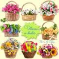 Клипарт PNG на прозрачном фоне – Цветы в корзинках