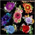 Цветочные кластеры на прозрачном фоне - Романтика