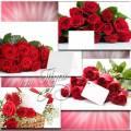 Шепчет роза о любви, ее послание лови - Клипарт