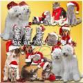 Новогодние собаки и коты - Клипарт