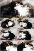 Кошкина любовь / Cat's love