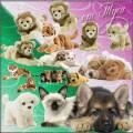 Клипарт - Собачки, котята, львята и тигрята
