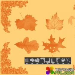 Набор кистей для Фотошоп - Осенние листья
