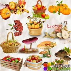 Набор осенних кластеров и клипартов для фотошопа – Осенние дары