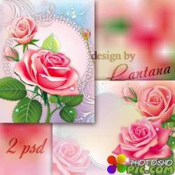 Многослойные фоны - Розы утренняя свежесть замерла на лепестках