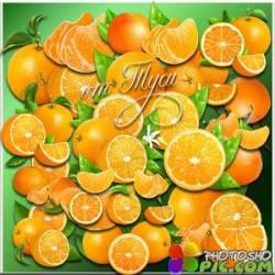 Апельсины - Клипарт