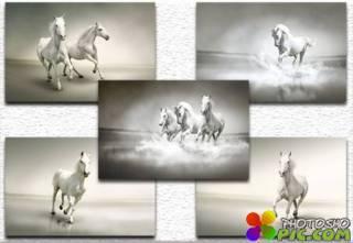Beautiful white horse / Красивая белая лошадь