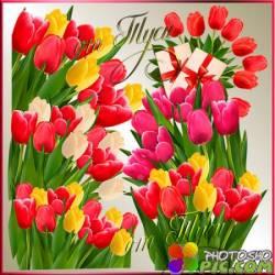 Клипарт - Тюльпаны