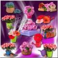 Цветочный микс - Клипарт