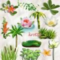 Клипарт, морской, летний, пальмы, лотос, кувшинка
