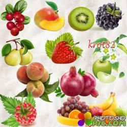 Ягодный и фруктовый клипарт – Абрикосы, гранаты, клубника, манго, малина
