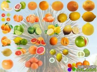 Клипарт Коллекция цитрусовых фруктов