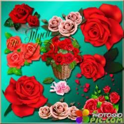 Клипарт - Нежные розы