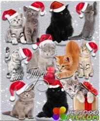 Новогодние коты - Клипарт