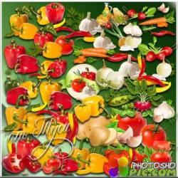 Клипарт - Овощи с огорода
