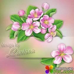 Psd исходник - Белоснежная красавица, дивный яблоневый цвет